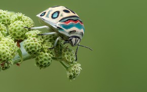 Picture macro, beetle, insect, picasso bug