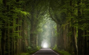 Picture road, trees, fog, the tunnel