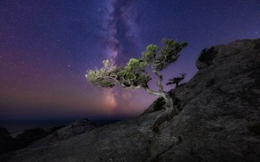 Picture sea, landscape, night, nature, rock, tree, stars, the milky way, Crimea, pine, New Light, Konstantin …
