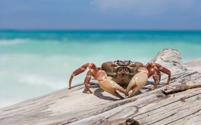 Picture sea, shore, crab