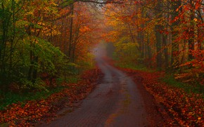Picture road, autumn, forest, trees, England