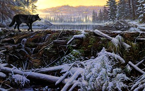 Picture winter, forest, grass, look, the sun, snow, mountains, branches, nature, shore, figure, wolf, picture, ate, …