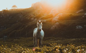 Picture white, look, the sun, rays, light, sunset, nature, pose, stones, horse, glade, vegetation, horse, hill, …