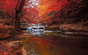 Picture autumn, forest, river, foliage, pond