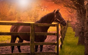 Picture field, autumn, grass, look, face, the sun, light, trees, branches, Park, horse, glade, horse, Board, …