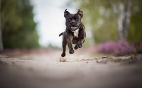 Picture jump, pretty, run