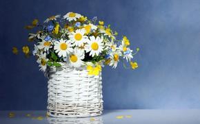 Wallpaper flowers, chamomile, bouquet, basket