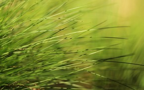 Picture background, weed, grass