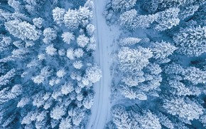 Picture Nature, Winter, Landscape, Snow, Trees