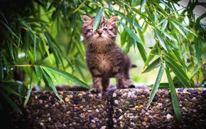 Picture cat, summer, leaves, branches, nature, stones, kitty, grey, baby, muzzle, kitty, striped