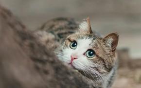 Picture cat, cat, face, tree, portrait, striped, green eyes, bokeh, Peeps, looking up