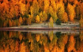 Picture autumn, forest, trees, landscape, nature, lake, reflection, shore
