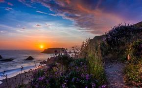Picture landscape, sunset, nature, the ocean, rocks, coast, vegetation, USA, Goat Rock State Park