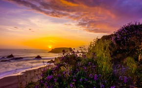 Picture landscape, sunset, nature, the ocean, shore, vegetation, USA