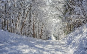 Picture winter, road, snow, trees, day