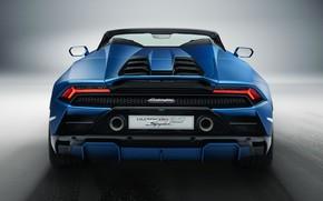 Picture Lamborghini, rear view, Spyder, Huracan, 2020, RWD, Huracan EVO
