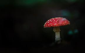 Picture mushroom, mushroom, black background