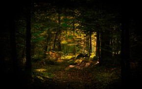 Picture autumn, forest, light, trees, branches, the dark background, trunks, foliage, twilight, path, the window