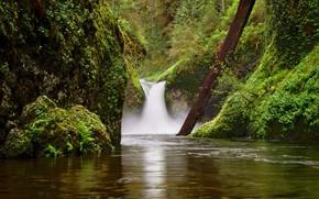 Picture river, rocks, waterfall, moss, Oregon, log, Oregon, Columbia River Gorge, Eagle Creek, Punch Bowl Falls, …