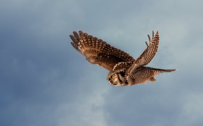 Picture the sky, flight, owl, bird, wings, flies, blue background, the scope, owl