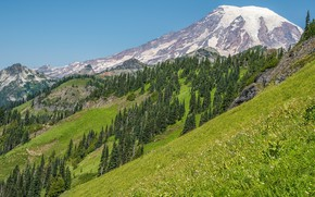 Picture greens, grass, mountains, slope, tree