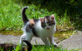 Picture cat, grass, look, nature, kitty, garden, baby, track, kitty, spotted, trekhchastny