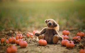 Picture field, autumn, grass, childhood, green, background, glade, toy, toys, garden, bear, bear, pumpkin, bear, sitting, ...