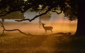 Picture branches, fog, tree, deer, silhouette