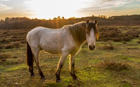 Picture field, look, face, light, horse, horse