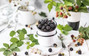 Picture berries, Cup, BlackBerry, twigs