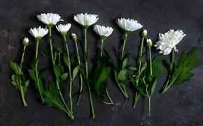 Picture flowers, bouquet, decor, Daisy