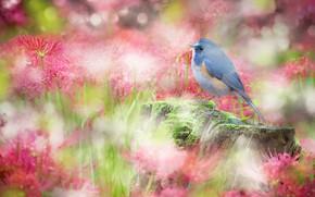 Picture flowers, bird, sweetheart, glade, stump, treatment, garden, red, pink, bird, bokeh, he lost his parents,, …