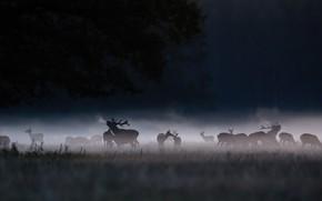 Picture night, fog, deer