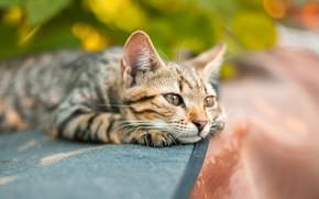 Picture cat, quiet, cement, feline