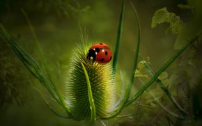 Picture greens, background, ladybug