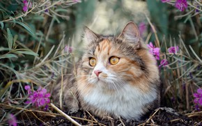 Picture cat, grass, nature