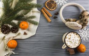 Picture Cup, cinnamon, slices, orange, tangerines, marshmallows