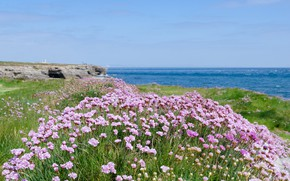 Picture sea, beach, flowers, shore, beach, sea, flowers, purple, meadow