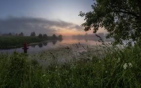 Picture grass, landscape, nature, fog, river, dawn, morning, Bank