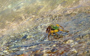 Picture water, pebbles, shore, for, crab, pond