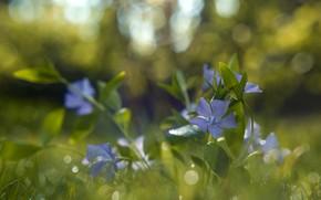 Picture summer, grass, macro, flowers, nature, bokeh