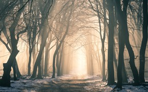 Picture winter, forest, rays, light, snow, trees, branches, fog, Park, trunks, morning, track, shadows, alley, path, …