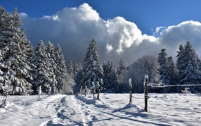 Picture cold, winter, snow