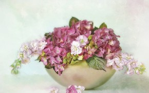 Picture leaves, flowers, bouquet, bowl, petals, art, pink, white, still life, painting, light background, hydrangea, composition