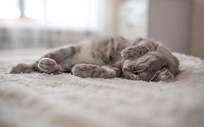 Picture cat, cat, mustache, legs, wool, lies, fluffy