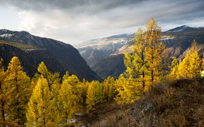 Picture autumn, trees, landscape, mountains, nature, valley, Altay