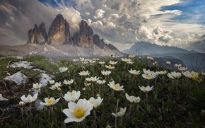 Picture clouds, landscape, flowers, mountains, nature, Italy, grass, anemones, The three Peaks of Lavaredo, The Dolomites, …