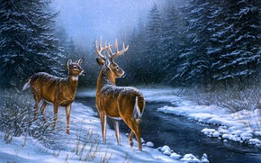 Picture winter, frost, forest, look, snow, night, branches, nature, pose, fog, stream, figure, picture, deer, ate, …