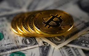 Picture blur, dollar, dollar, coins, bitcoin, bitcoin, btc