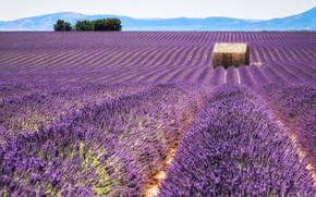 Picture field, summer, the sky, flowers, nature, France, the barn, house, a lot, the ranks, lavender, …